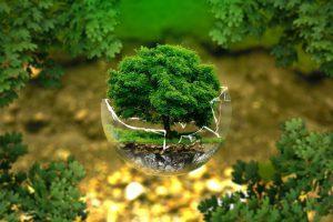 kreatywni ekologicznie